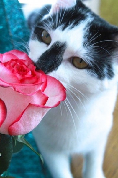 Gracie Mae with pink rose