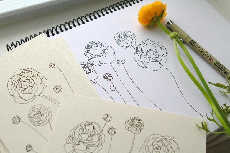 ranuculus drawing2.WEB